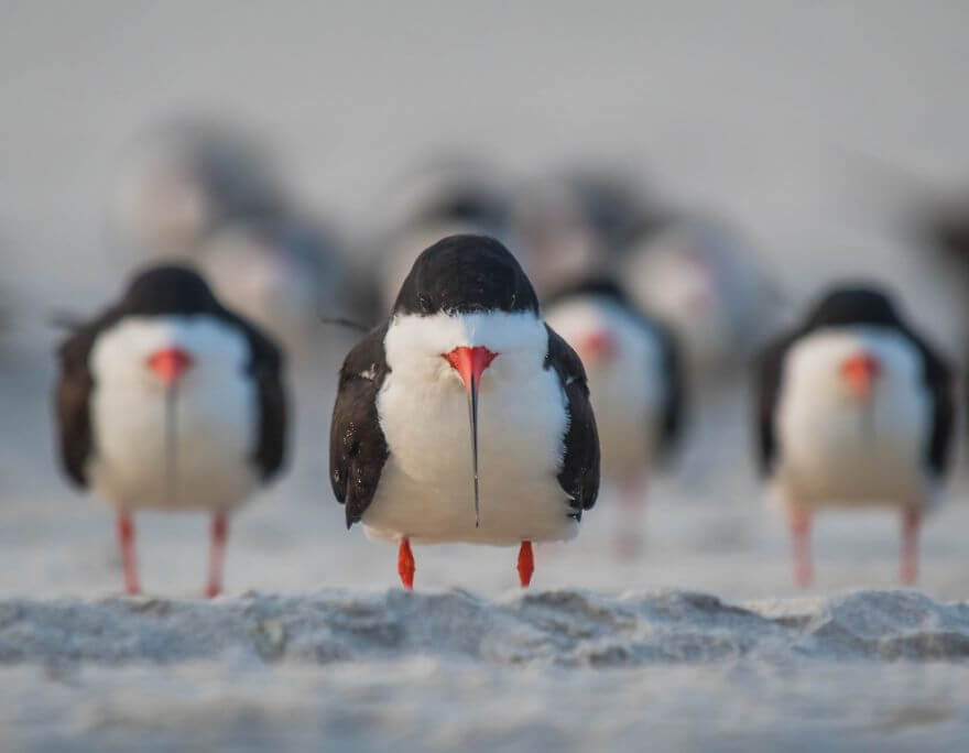 These Are The Finalists Of The Comedy Wildlife Photography Awards