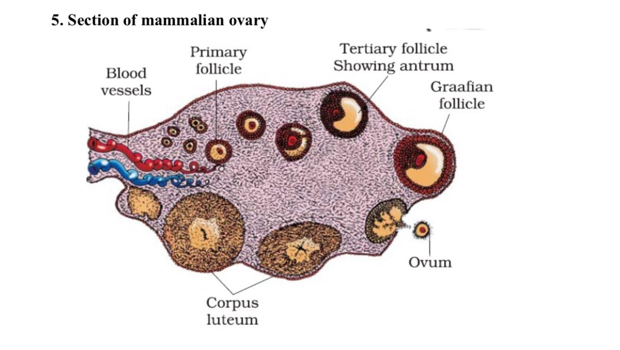 Biology Most Important Diagram