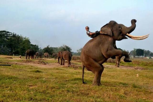 Taman Nasional Way Kambas, Tempat Wisata di Lampung Timur Yang Paling Meimikat Turis asing, gajah sumatera