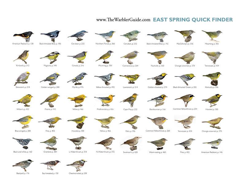 new directions meet warblers birds