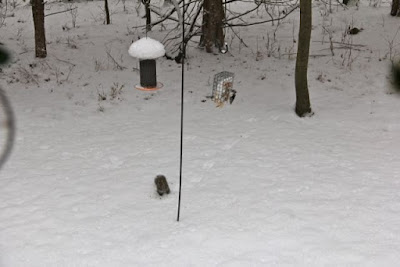 what we usually get at the front feeder