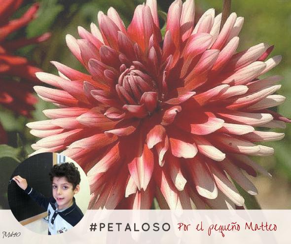 Matteo palabra petaloso italia