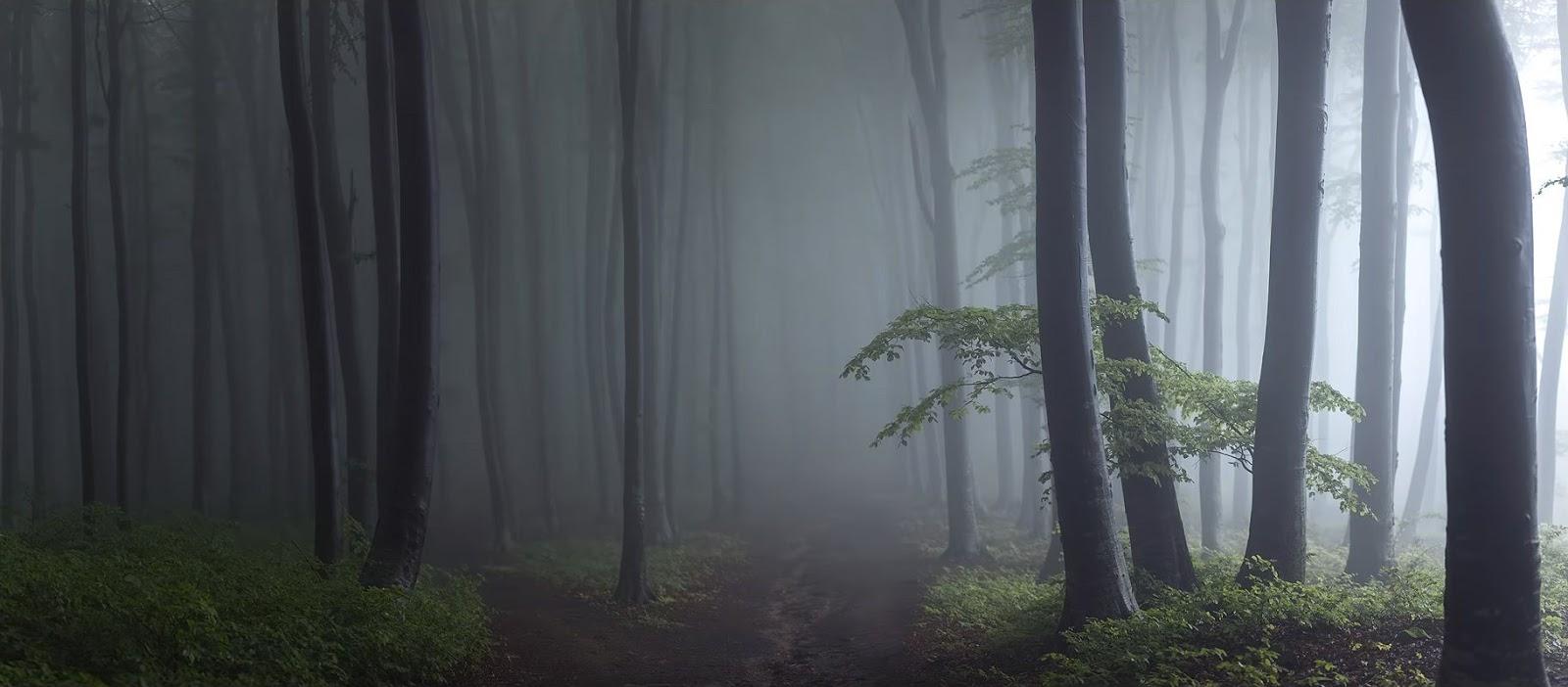 Туманный лес, фотограф Тома Бончиу