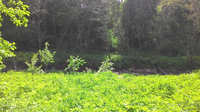 Река Кыштым за зарослями крапивы