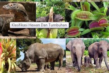 Pengertian Klasifikasi Pada Hewan dan Tumbuhan