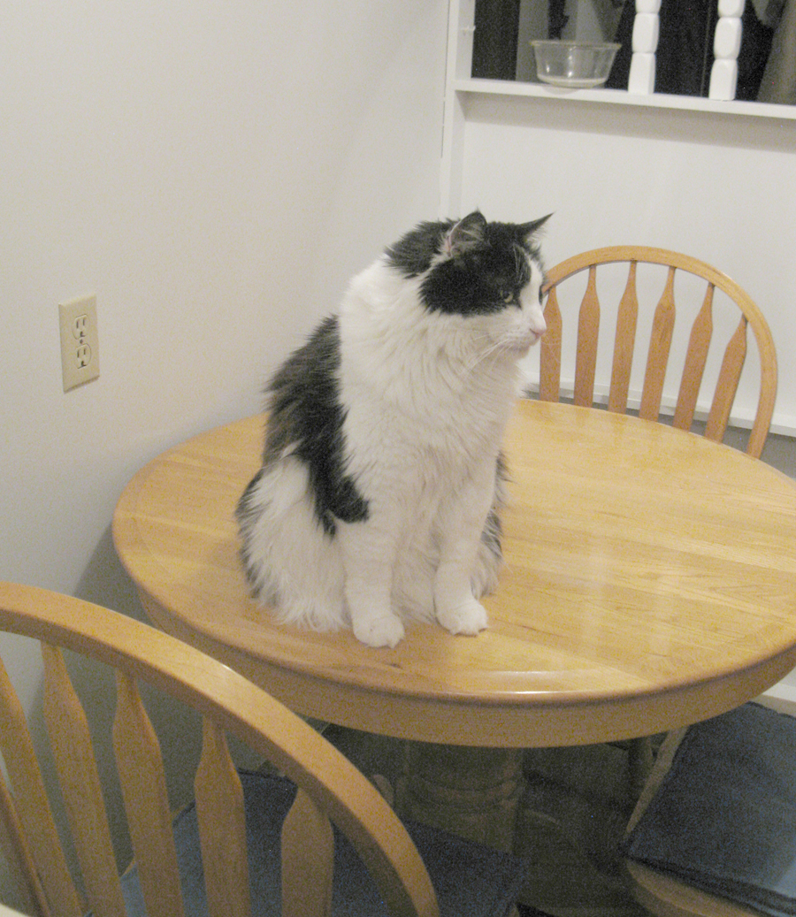 I Have Three Cats Dining Table Etiquette Interiors Inside Ideas Interiors design about Everything [magnanprojects.com]
