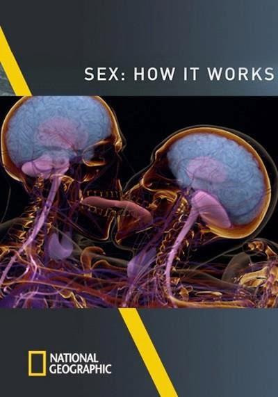 Hoạt Động Của Tình Dục - Sex How It Works