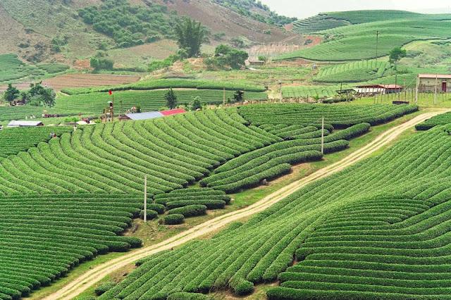 Stunning fields in Northern Vietnam 3