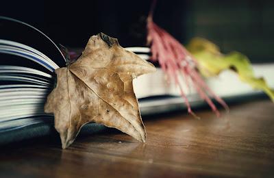 Hojas sobre un libro en una mesa
