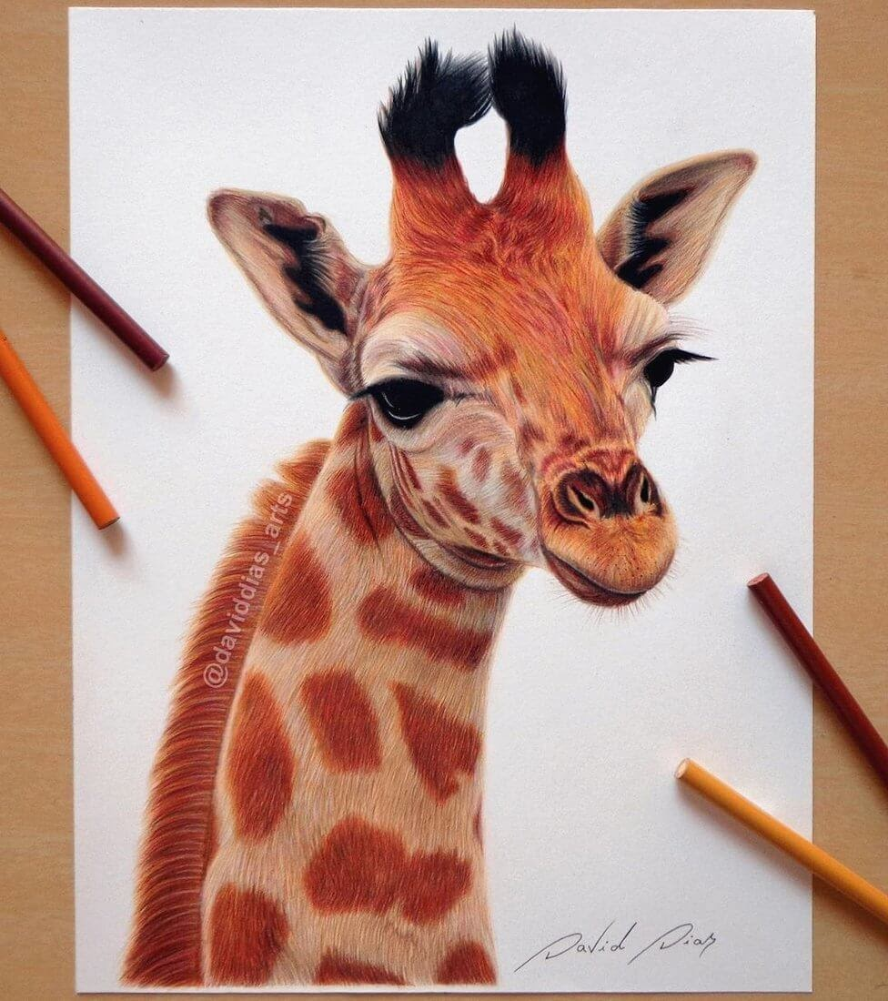 05-Giraffe-David-Dias-Drawings-Spanning-Many-different-Subjects-www-designstack-co
