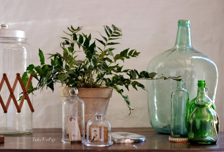 Lista de algunas plantas que me tienen fascinada, os cuento sus cuidados y cómo decorar con ellas