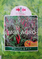 benih cabai, cabai rawit, cabai pelita 8, pelita 8, cabai pelita 8 f1, pt east west seed indonesia