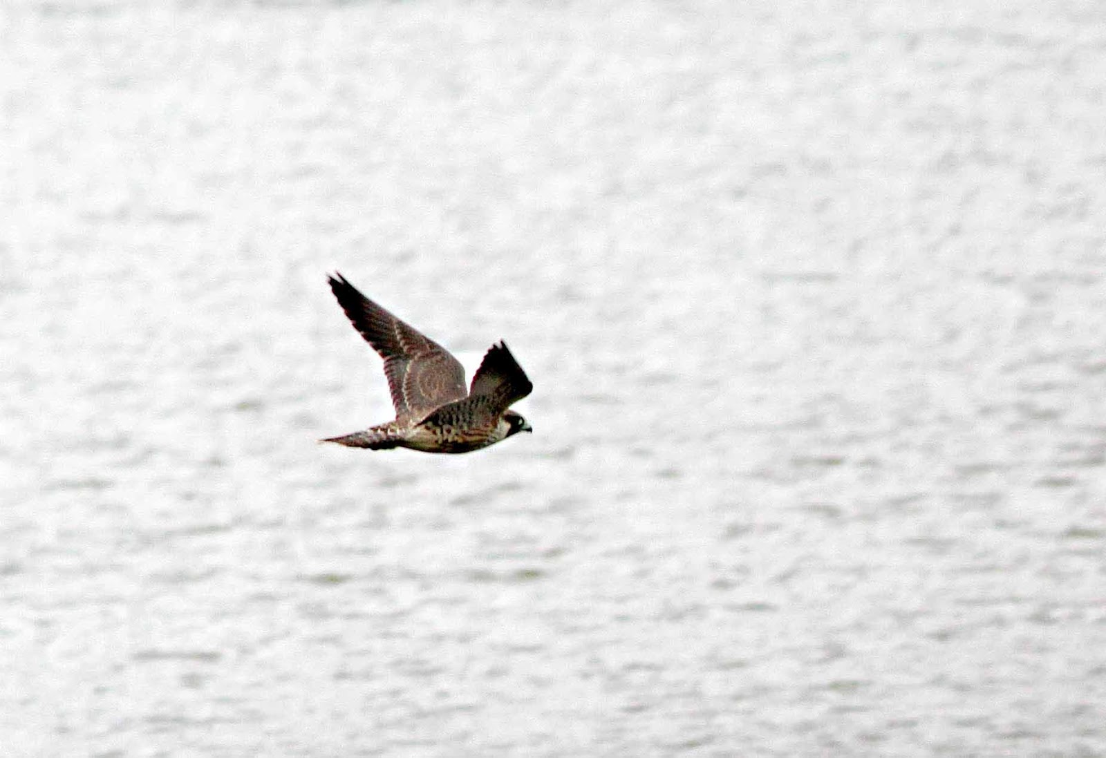 Barnsley Bird Sightings: a few pics from today