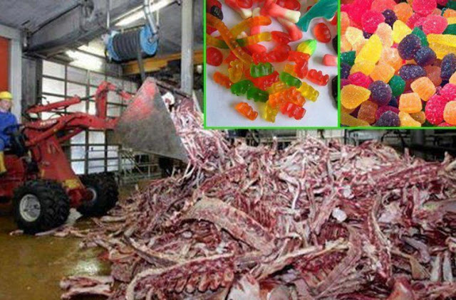 AFTER SEEING HOW GUMMY CANDIES ARE REALLY MADE, YOU'LL NEVER EAT THEM AGAIN (DISTURBING & GRAPHIC)