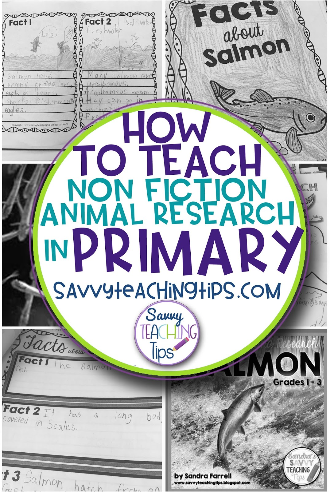 How To Teach Non Fiction Animal Research In Primary