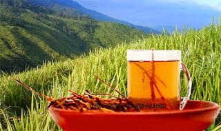 obat herbal kencing sakit keluar nanah paling ampuh