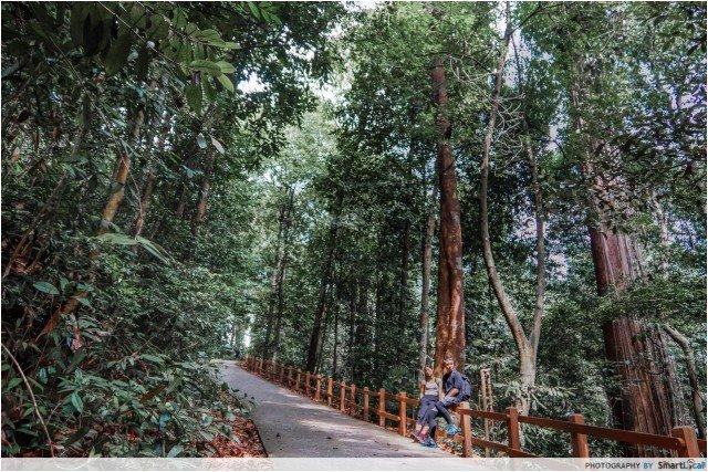 Bukit Timah Nature Reserve (Summiy Trail)