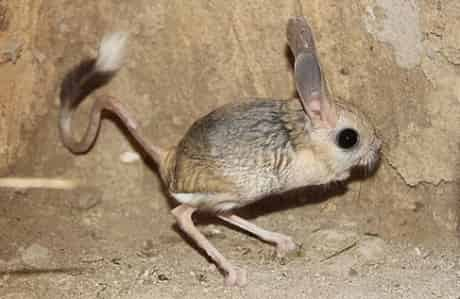 Binatang Aneh Didunia Yang Dikira Hoax