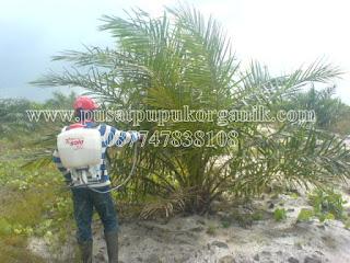 cara pengendalian hama dan penyakit pada tanaman kelapa sawit