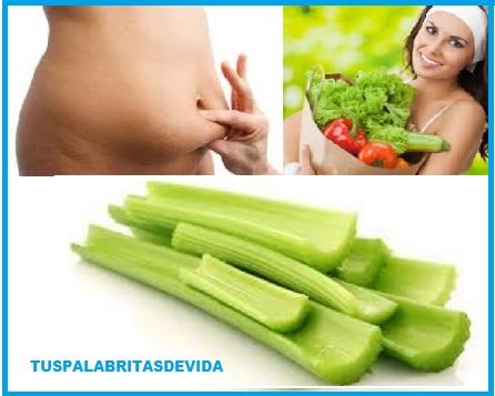 Alimentos que ayudan a quemar la grasa abdominal tus palabritas de vida - Alimentos que ayudan a quemar grasa abdominal ...