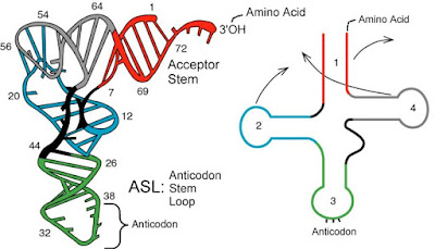 RNA-t