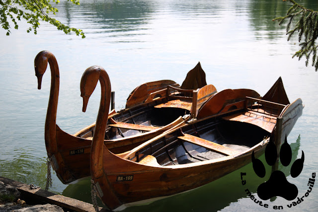 barques-cygnes-lac-bled-slovenie