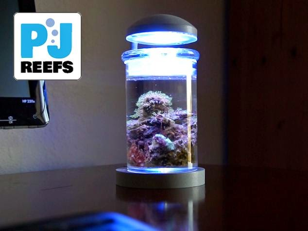 Coolest Fish Bowls and Awesome Aquarium Designs (15) 11