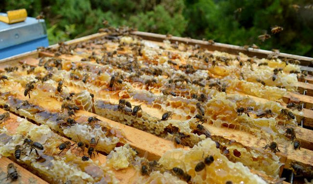 Πατέντες για εύκολη μελισσοκομία που δεν έχουν έρθει ακόμα στην Ελλάδα