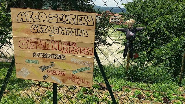 Orto Scuola Vicchio: Orto a terrazza nel sentiero - Le insalata crescono