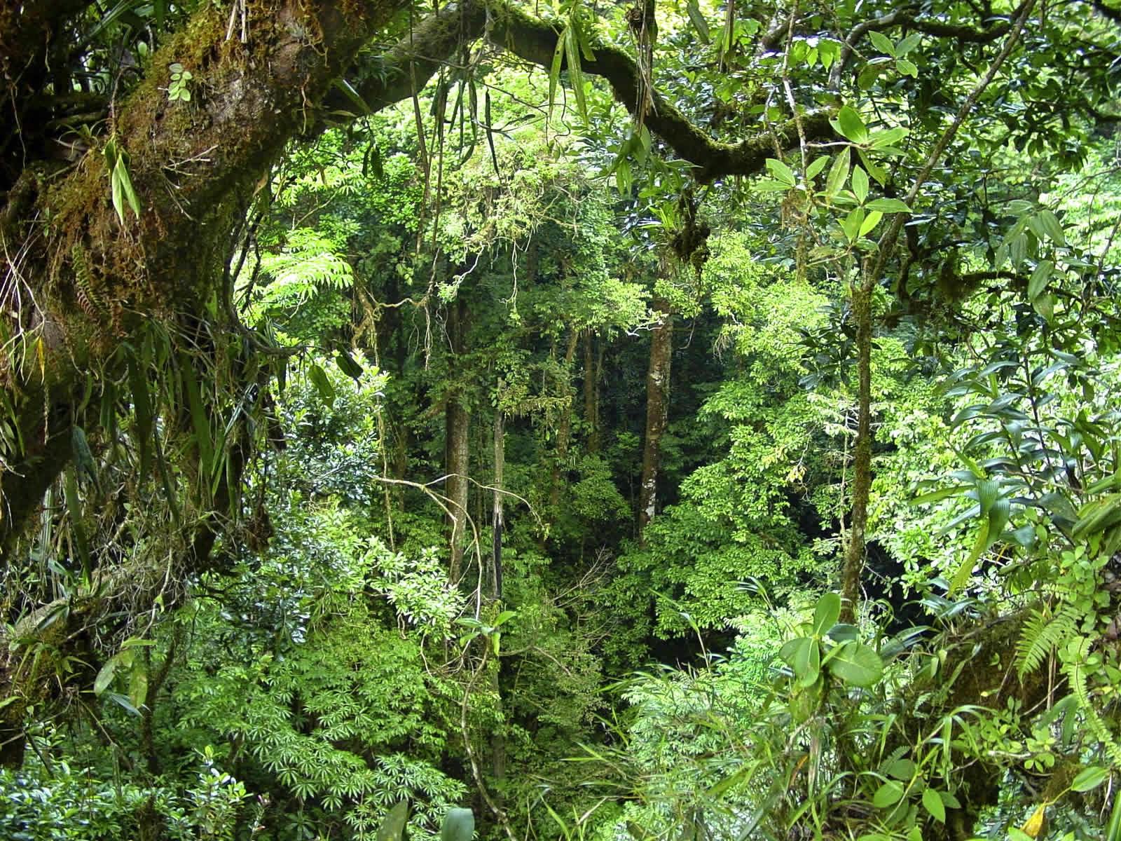 Fenomena Pemandangan Hutan Yang Menakjubkan Suka Berpetualang