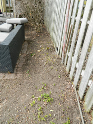 The Junction Spring Backyard Garden Cleanup After by Paul Jung Gardening Services a Toronto Gardening Company