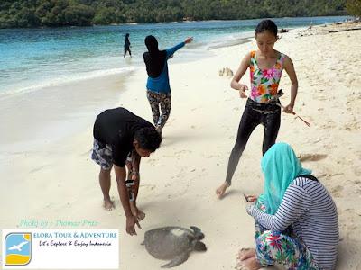 penyu-terdampar-di-pulau-kelapa-teluk-kiluan