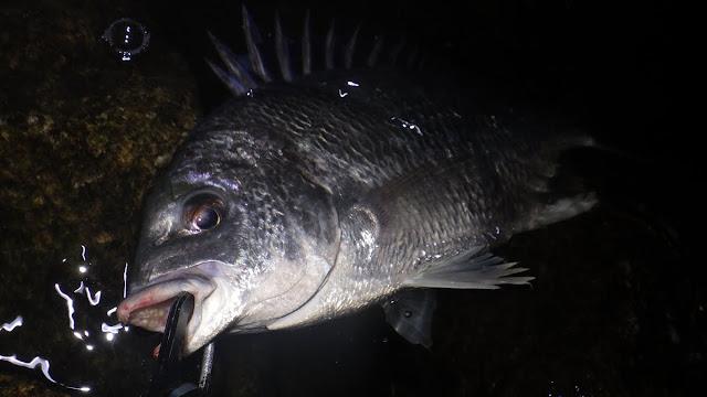 キビレ ボトムチニング 湾奥 河川 Chinu HEAD (チヌヘッド) SV-30 1/16oz.(1.8g) + JACKALL シザーコーム 2.5inch
