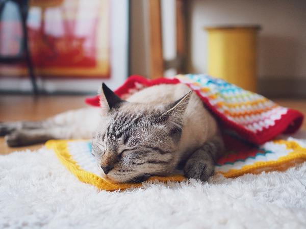 グラニースクエアのモチーフにはさまれて寝ているシャムトラ猫