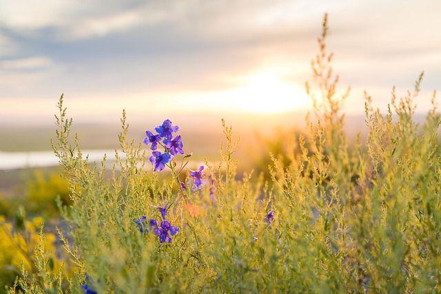 hoa dại đẹp nhất 9