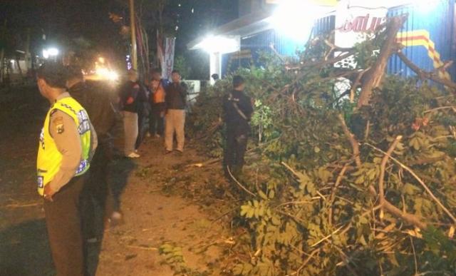 AGEN BOLA - Tragedi Pohon tumbang Saat Pawai Takbiran Melintas