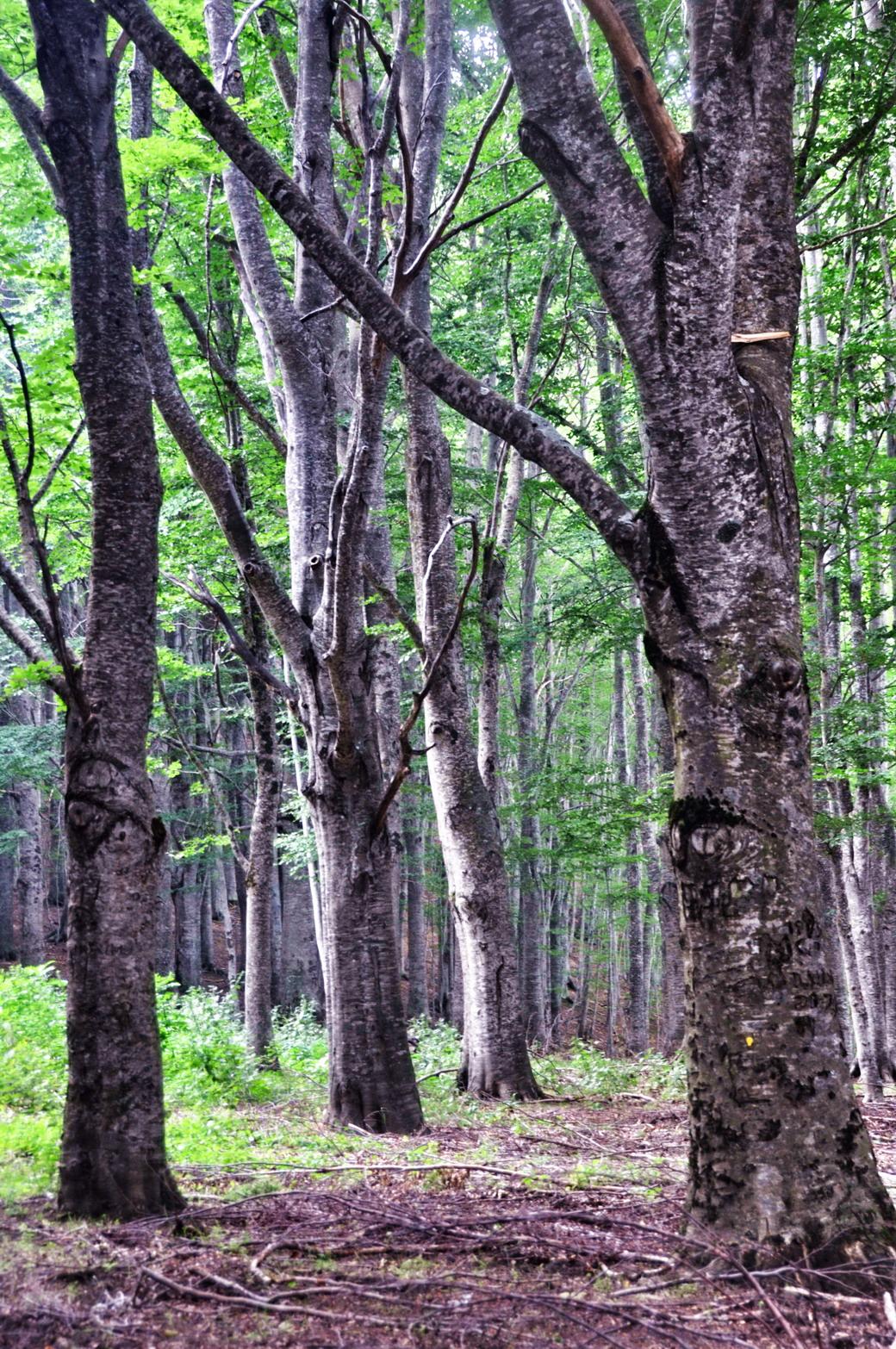 2 colpi nel bosco - 2 4
