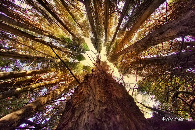 Φυση,δασος,δεντρα ,ηλιος ,φωτογραφια Κώστας Λαδάς