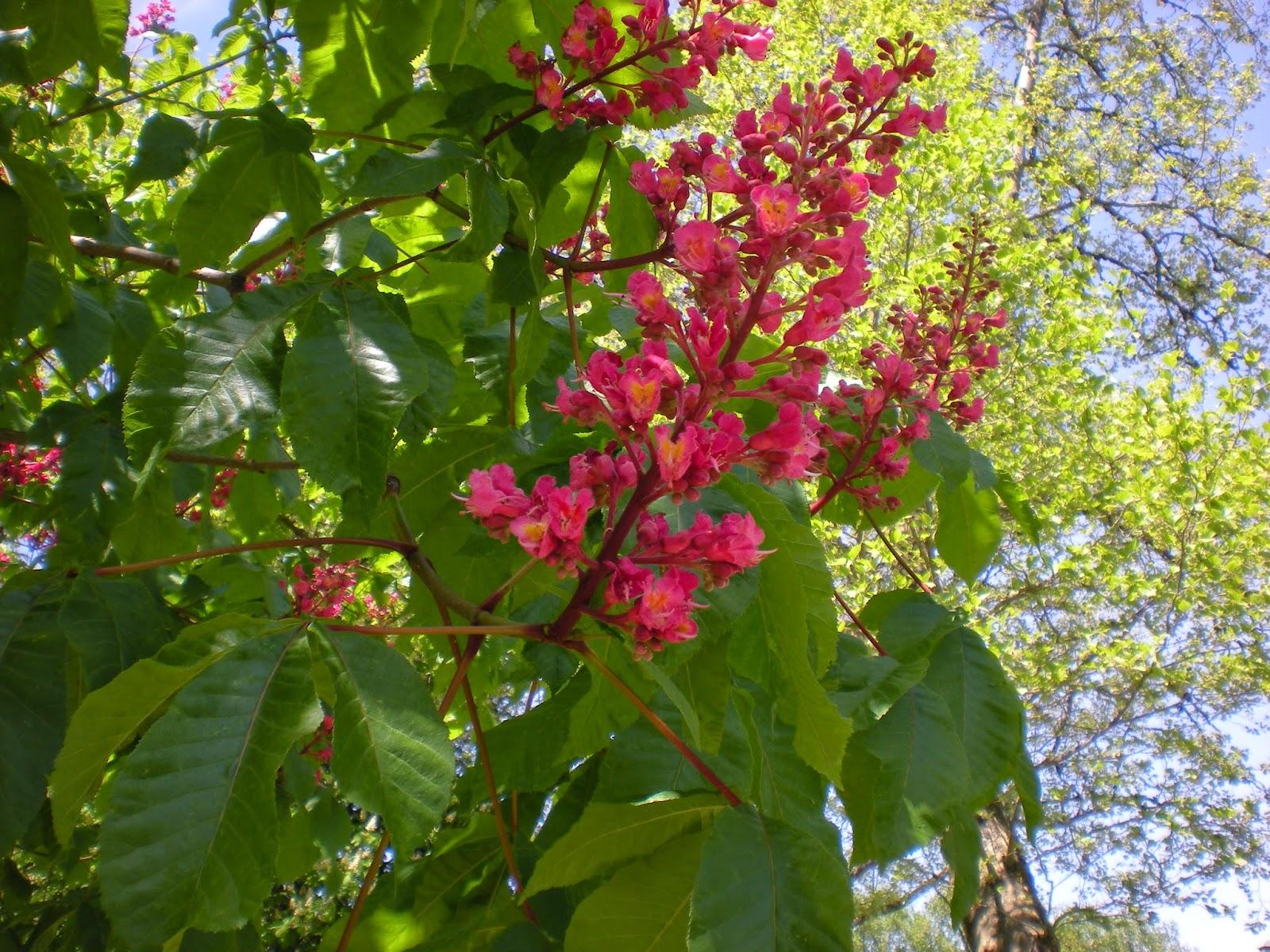 Permalink to Buckeye Flower Pot