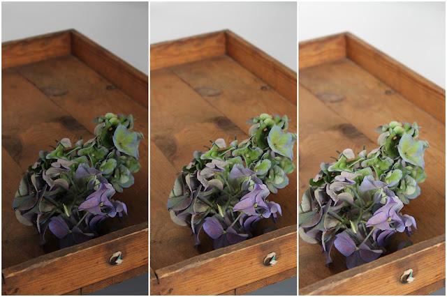 Kameraeinstellung Belichtungszeit besser fotografieren Hortensie Foto Workshop Berit