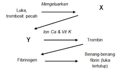 diagram proses pembekuan darah