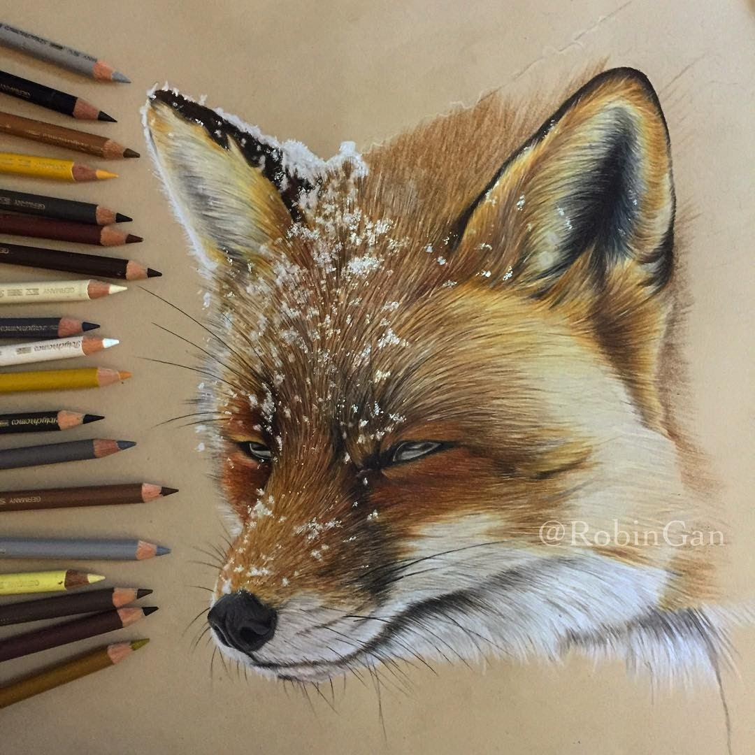 04-Red Fox in the Snow WIP-Robin-Gan-Realistic-Color-Pencil-Animal-Drawings-www-designstack-co