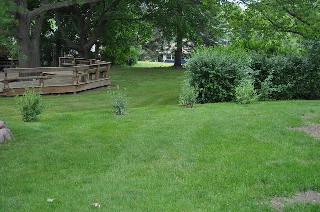 spirea, steins, planting, gardening, diy, landscaping