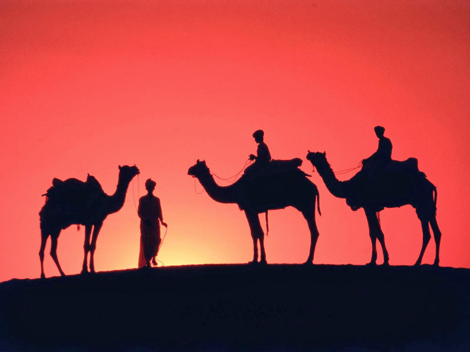 camels_in_the_desert_1920x1440.jpg