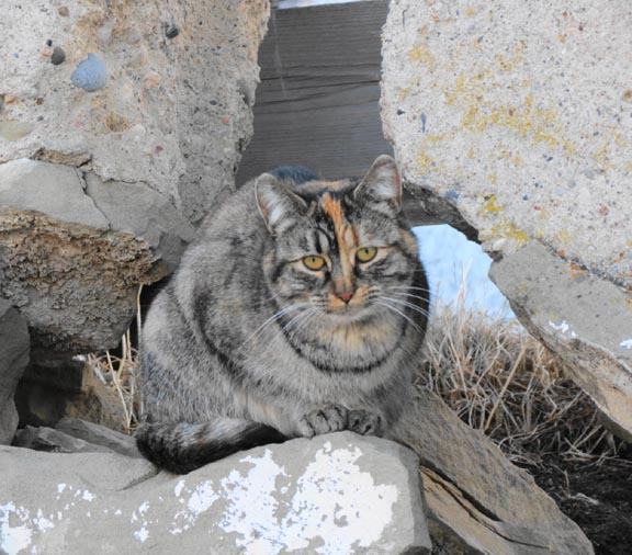 Cattales from Barn Cat Mansion: February 2012
