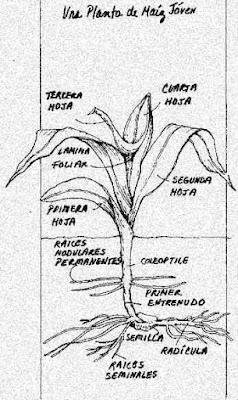 Huertos y Cultivos