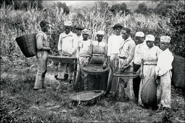 Cesar Hinojosa Quiroz y el mundo del café: La historia del café en Brasil