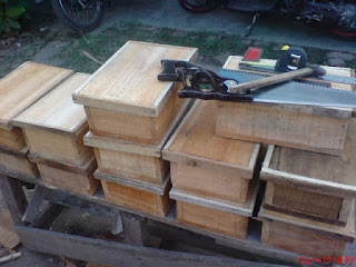 sarang trigona kayu tebal