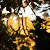 Balade d'automne à Mons (Celas)
