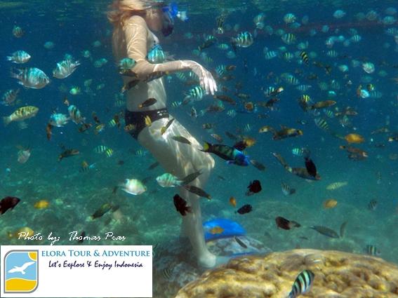 Snorkeling bareng Bule Cakep di Pulau Balak dan Tanjung Putus